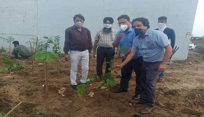 ngt municipal corporation plantaion budha darya