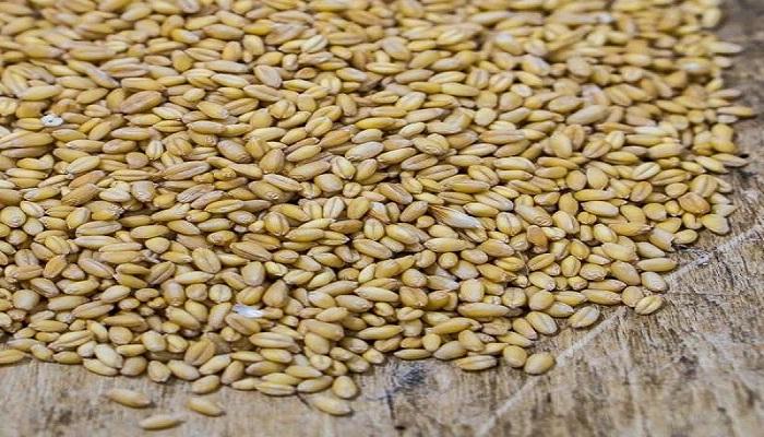 Cheap wheat will also be available