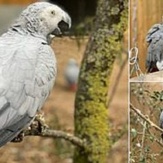 five parrots removed from zoo in england