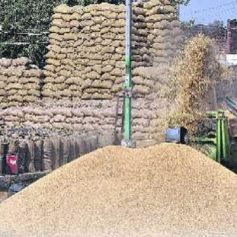 No government procurement of paddy