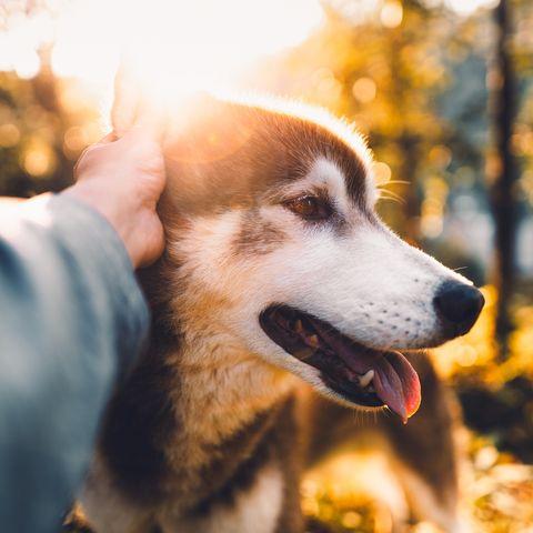 dogs get corona vaccine gorakhpur