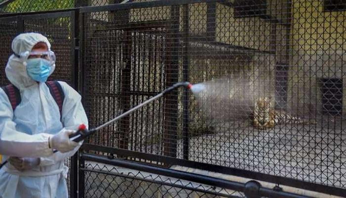 Delhi zoo sample report found
