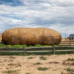 People live inside Potatoes