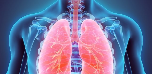 Lungs healthy food