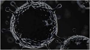 jammu declared black fungus as an epidemic