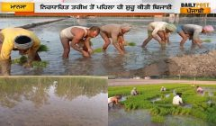 Farmers started sowing paddy
