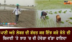 Paddy sowing method