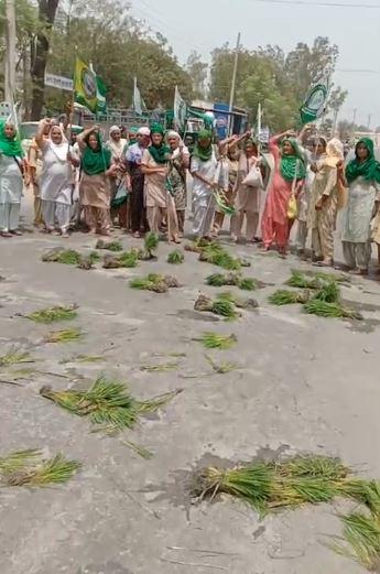Farmers dig up paddy in harjeet grewals fields