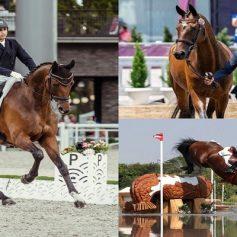 equestrian fouaad mirza qualifies