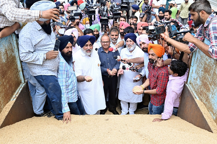 Punjab govt exposes paddy